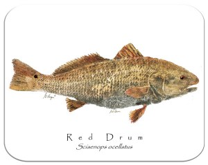 Redfish white board